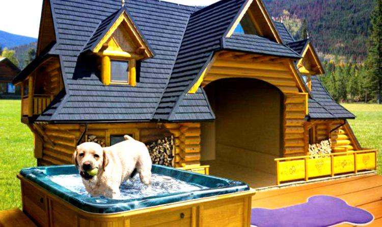 Las casitas de perro más caras del mundo