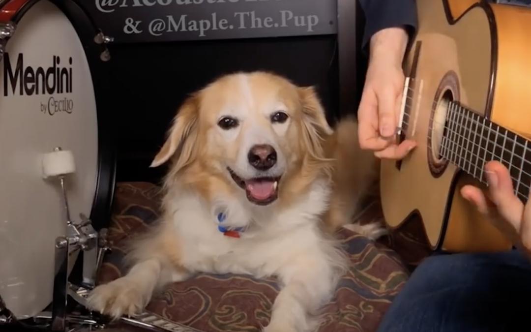 El perro con mejor ritmo