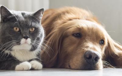 Perros y gatos que no se llevan tan mal