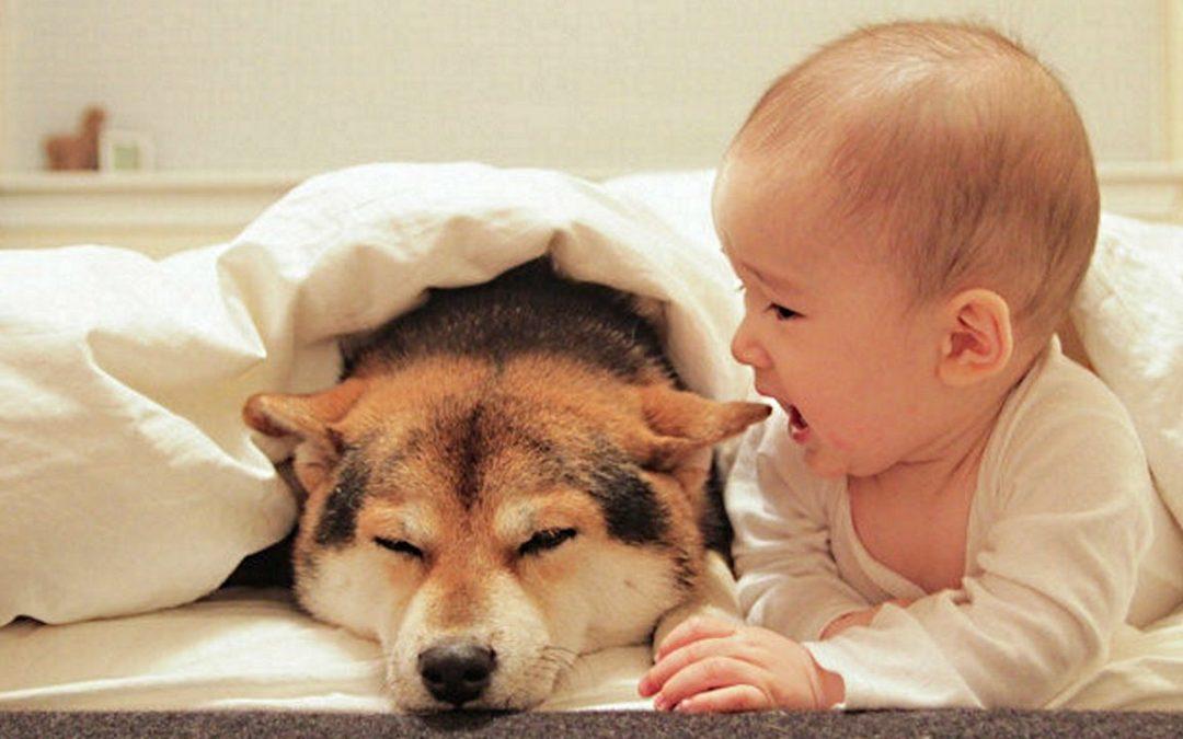 Para los que dicen que es peligroso tener un perro con bebés en casa