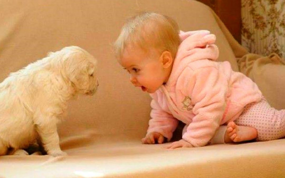 Bebés y perros