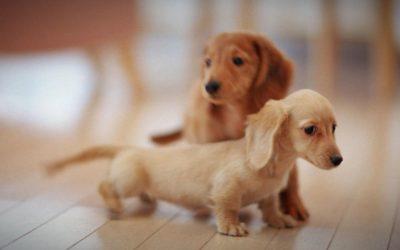 La mejor recopilación de cachorritos